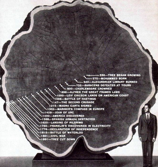 tree_timeline.jpg